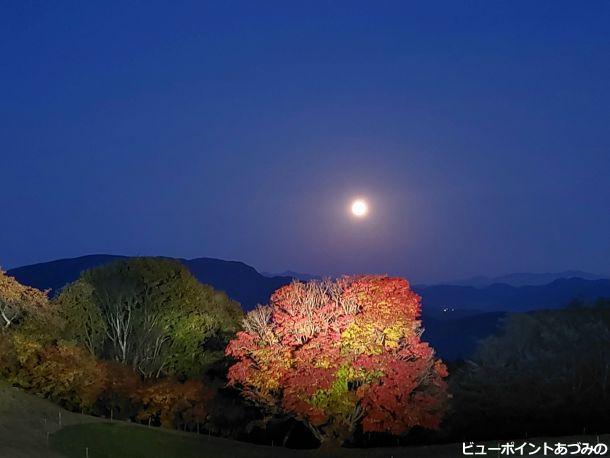 満月との共演