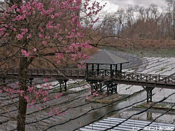 紅梅と幸いの架橋