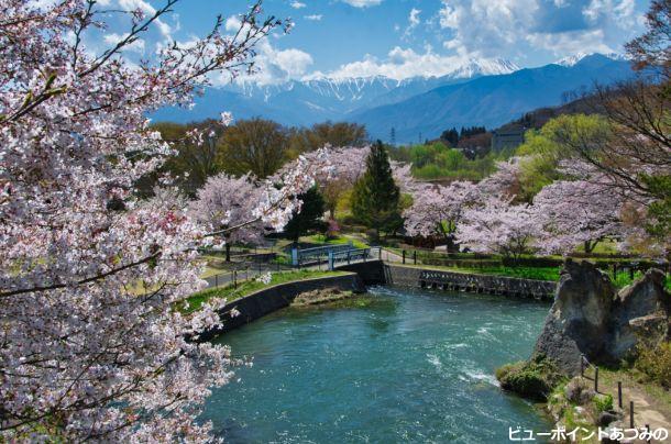 桜満開の龍門淵公園