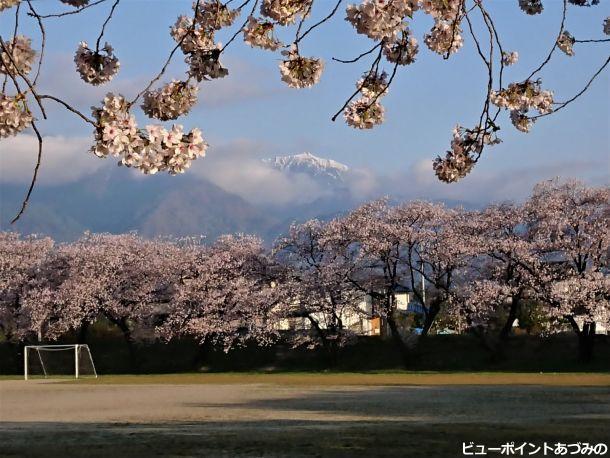 桜色の餓鬼岳