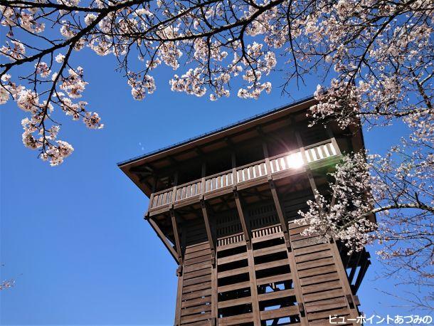 木製の展望台と桜