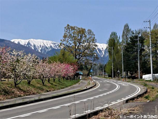 花桃と大滝山