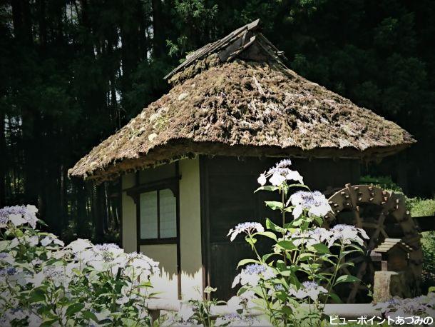紫陽花と水車小屋