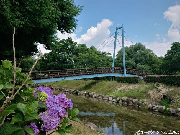 吊り橋と紫陽花