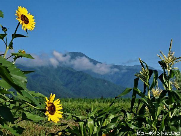 有明山と向日葵