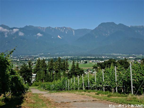 葡萄畑と有明山