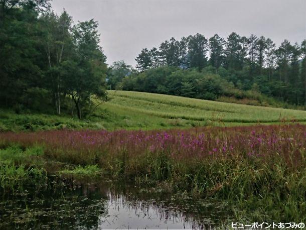 蕎麦の花と幻の池