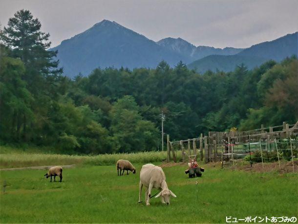 山羊と蓮華岳