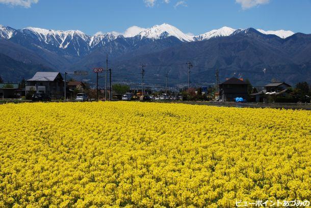 菜の花咲く安曇野