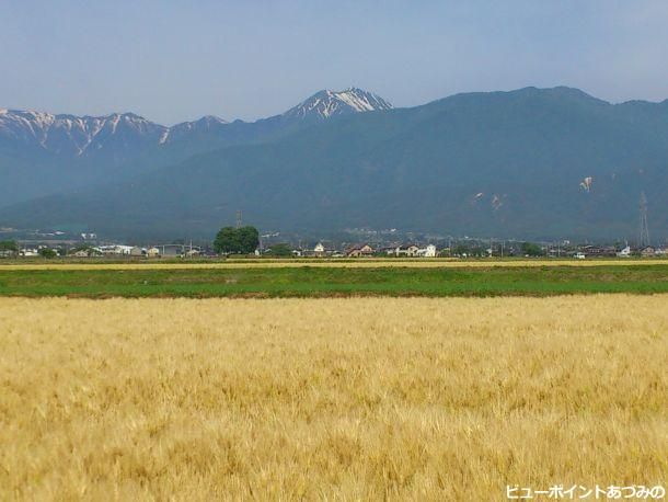 麦秋の安曇野