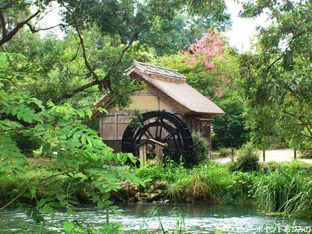 百日紅と水車小屋