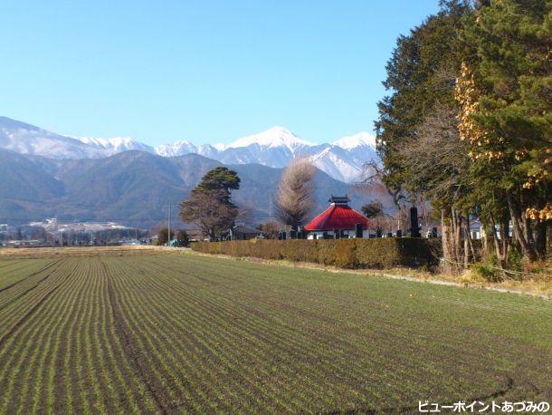 麦畑と常念岳