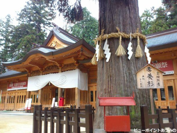 穂高神社の孝養杉
