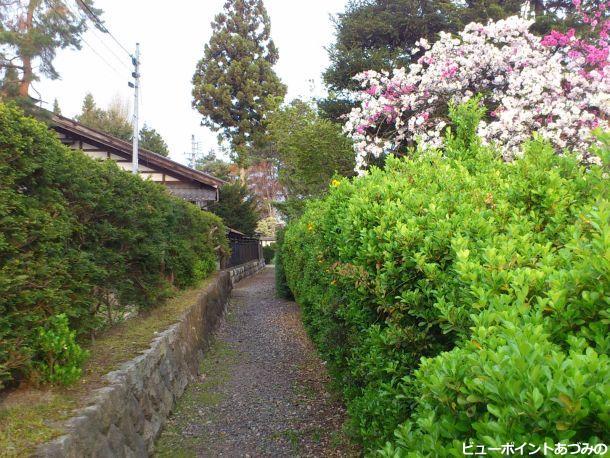 花桃咲く小路