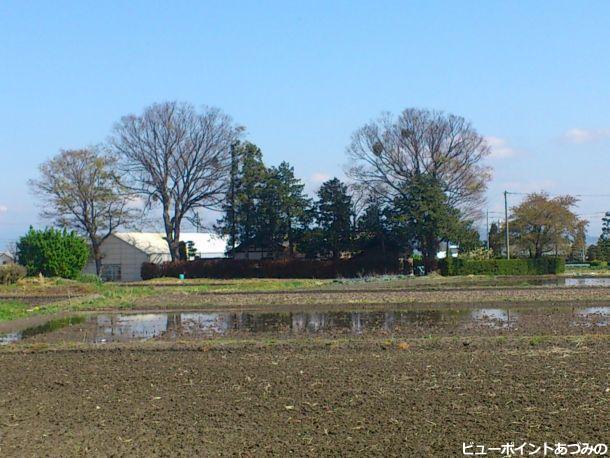 三郷中萱の屋敷林