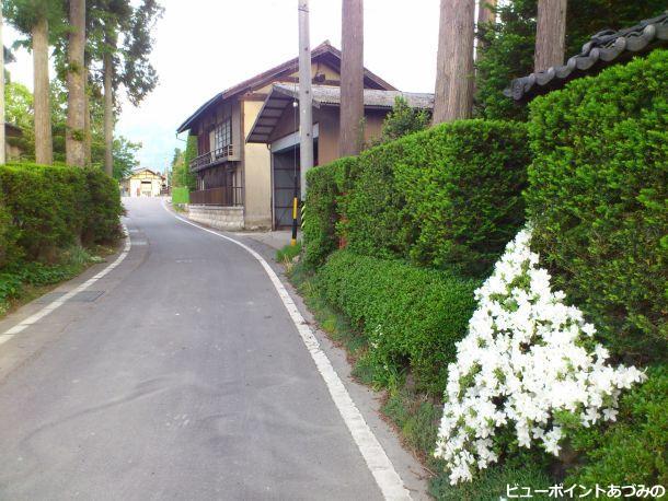 歴史薫る緑の小路