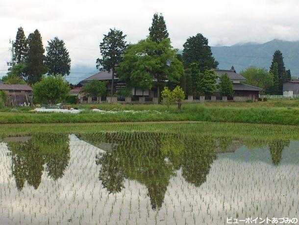 水田に映る屋敷林