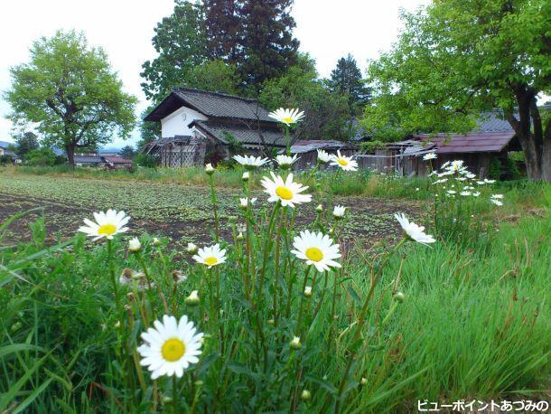 花咲く農村