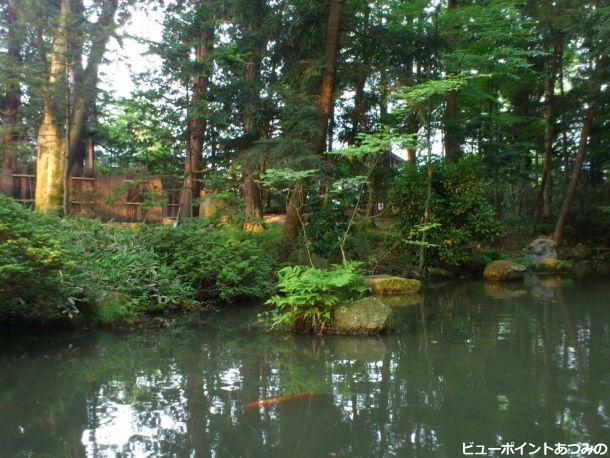 穂高神社の神池