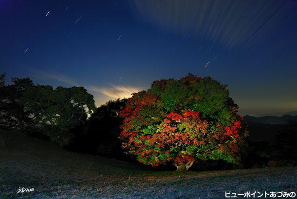 星降る空の七色大楓